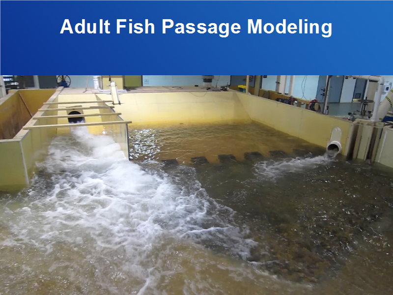 Agree, Adult fish passage remarkable words